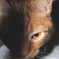 Kitty by Jost Houk