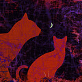Kitty Kitty by Darin Baker