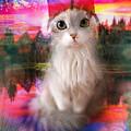 Kitty by Maciej Mackiewicz