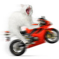 Kitty On A Motorcycle Doing A Wheelie by Oleksiy Maksymenko