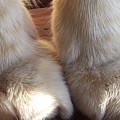 'kitty Paws' by Paula  Heffel