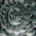 Kitty Portrait  by Jeff Swan