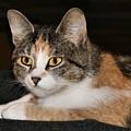 Kitty by Roxanne Jones