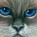Kitty Starry Eyes by Minaz Jantz