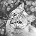 Kitty The Cat by Iren Faerevaag