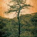 Knarly Tree by Stevie Benintende