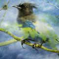 Knowing It Has Wings by Belinda Greb