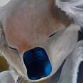 Koala Detail by Catt Kyriacou