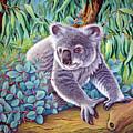 Koala by Tish Wynne