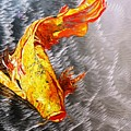 Koi Fish Aluminum Print, Unique Gift For Any Home Or Office. 'the Silver Koi'. by Sasha Toporovsky