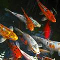 Koi Fish IIi by Elizabeth Hoskinson