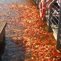 Koi Fishes In Feeding Frenzy Part Two by Christopher Shellhammer