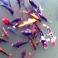 Koi Gathering by Lord Frederick Lyle Morris - Disabled Veteran