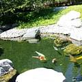 Koi Pond 11 Japanese Friendship Garden by Phyllis Spoor
