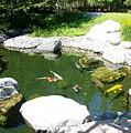 Koi Pond10 Japanese Friendship Garden by Phyllis Spoor