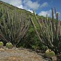 Koko Crater Cacti by Michael Peychich