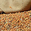 Kona Coffee Living History Farm Coffee Beans by Bruce Gourley