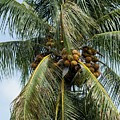 Kooky For Coconuts by Sabrina L Ryan