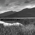Kootenay Marshes In Black And White by Lawrence Christopher