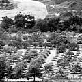 Kourion Farm by John Rizzuto