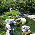 Kpi Pond 9 Japanese Friendship Garden by Phyllis Spoor