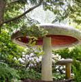 Krider Garden Mushroom by David Arment