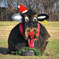 Kris Kringle Cow by Bill Swartwout Photography