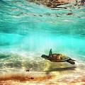 Kua Bay Honu by Christopher Johnson