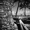 Kuau Beach Palm Trees And Hawaiian Outrigger Canoe Paia Maui Haw by Sharon Mau