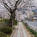 Kyoto In Bloom by Jenny Hudson