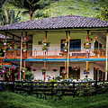 La Finca De Cafe - The Coffee Farm by Francisco Gomez