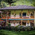 La Finca De Cafe - The Coffee Farm by Francisco Gomez