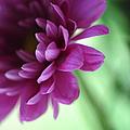 La Fleur De L' Amour by Jenny Rainbow