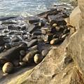 La Jolla Beach by Bethany Morrow