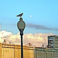 La Lune L'oiseau L'usine by Contemporary Luxury Fine Art