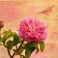 La Rose by Kim Hojnacki
