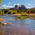 Lab In River At Sedona Arizona by Waterdancer