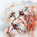 Labradoodle by Stephie Butler
