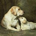Labrador Dog Breed With Her Puppy by Sergey Ryumin