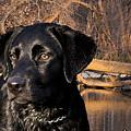Labrador Retriever by Cathy Beharriell