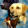 Labrador Retrievers by Becky Herrera