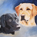 Labrador Retrievers Zoom And Kes by Janice M Booth