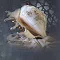 Lace Murex Sea Shell In Blue 2 by Betty LaRue