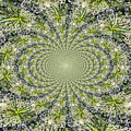 Lacey Kaleidoscope by Teresa Mucha