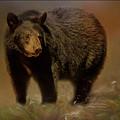 Black Bear In The Fall by Teresa Wilson