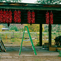 Ladder And Ristras Sopyn's Fruit Stand Rinconada Nm by Troy Montemayor