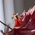 Lady Bug Flight by Becca Buecher
