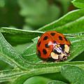 Lady Bug by Mary Halpin