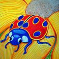 Lady Bug by Nick Gustafson