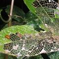 Lady Bug by Robert Cunningham